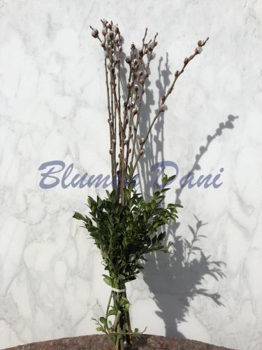 Palmkätzchen - Salix caprea