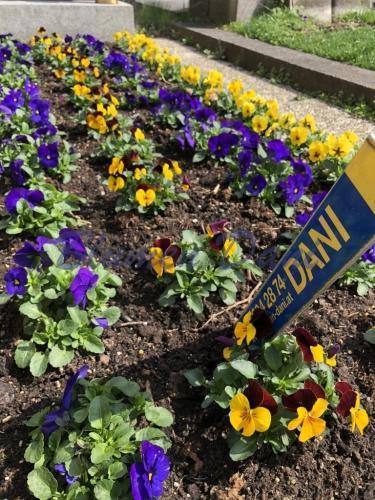 Grabplege - Blumenschmuck ganzes Grab